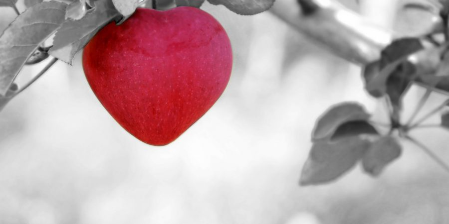 10 ways to love your WordPress website this Valentines Day
